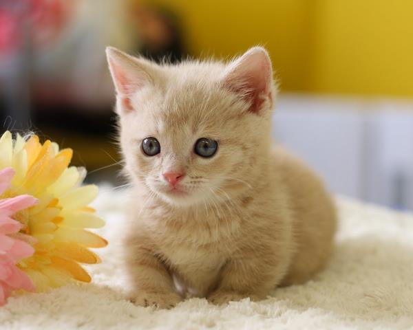 野良猫の糞尿被害で困っている方への豆知識